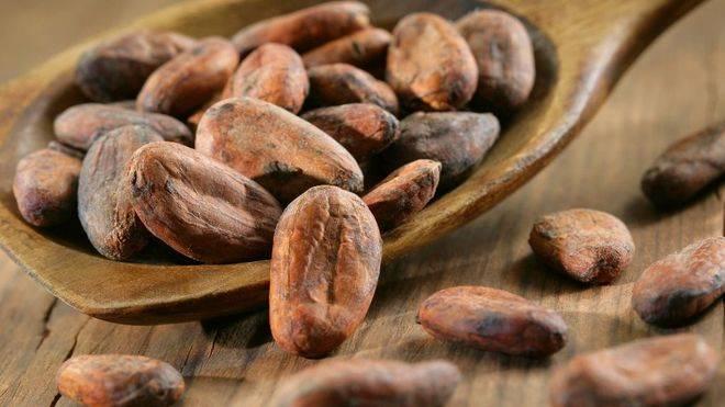 El cacao tiene efectos beneficiosos contra la Obesidad