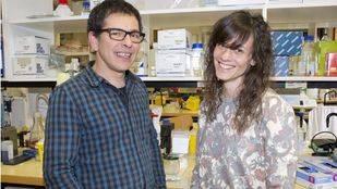 Descubren en el ADN 'basura' un gen clave en el desarrollo de la enfermedad celiaca