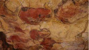 Investigadores de la UC participan en estudio sobre la utilización de conchas marinas como instrumentos para preparar los colorantes de las pinturas de Altamira