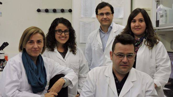 Investigadores de la Universitat e INCLIVA validan un método genético para tratar la distrofia miotónica de tipo 1