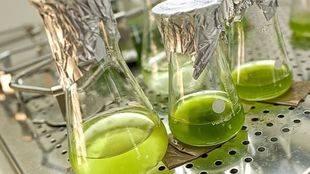 Un estudio de profesores de la UMU destaca la dependencia del exterior en el sector español de biocarburantes