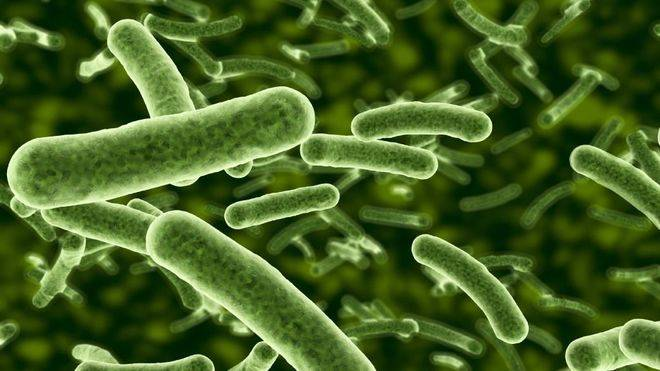 Nuevo mecanismo molecular para luchar contra las infecciones bacterianas