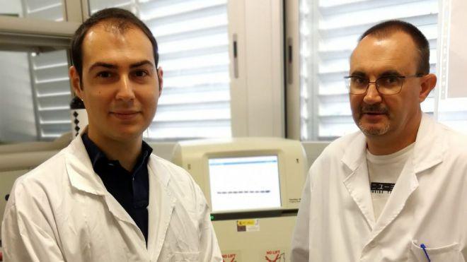 Descubren cómo regular una proteína implicada en la diabetes y en la metástasis tumoral