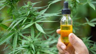 El uso del CBD con fines medicinales a lo largo de los años